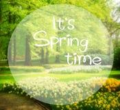 Pelouse d'herbe avec le jardin de jonquilles au printemps Photographie stock