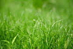 Pelouse d'herbe de matin Photos libres de droits