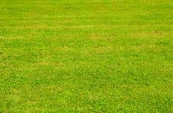 Pelouse d'herbe verte Photographie stock