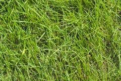 Pelouse d'herbe verte chez Sunny Summer Day Photo stock