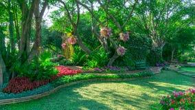Pelouse d'usine fleurissante colorée et d'herbe verte sous le groupe d'arbres dans un bon jardin d'entretien de soin, passage cou image stock