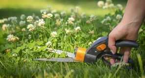 Pelouse de coupe avec des ciseaux dans des endroits de dur-à-portée, professionnel de jardinier photographie stock libre de droits