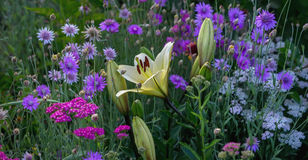 Pelouse de fleur Photographie stock