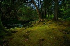Pelouse de forêt Images stock