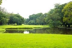 Pelouse et arbres verts photographie stock libre de droits