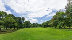 Pelouse et arbres verts avec le ciel bleu au parc public images stock