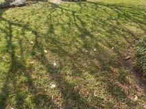Pelouse et ombre vertes de l'arbre au soleil l9ght Photographie stock