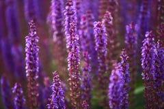 Pelouse florale Photo libre de droits