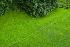 pelouse verte Image libre de droits