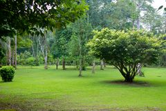 Pelouse verte en parc tropical photos libres de droits
