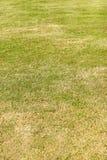 Pelouse verte - herbe artificielle Photos stock