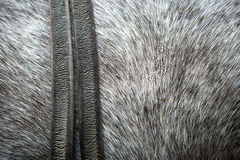 Pelt from a horse Stock Photography
