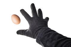 Pelted With Egg. Labour Hand Pelted With Egg Royalty Free Stock Image