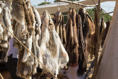Pelts of fur animals hang on rope Royalty Free Stock Image