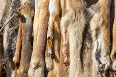 Pelts of fur animals hang on rope Royalty Free Stock Photos