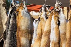 Pelts of fur animals hang on rope Royalty Free Stock Photography