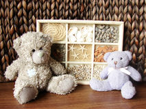 Peluche-carrega & seashells Fotografia de Stock