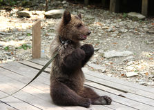 Peluche-urso fotografia de stock