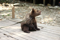 Peluche-urso foto de stock