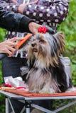 Peluquero para los perros Imagen de archivo
