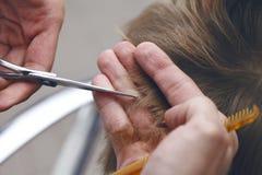 Peluquero principal que hace el primer del corte de pelo imagenes de archivo