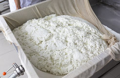 Pelusa de la gasa del búfalo de la producción de queso Imagen de archivo