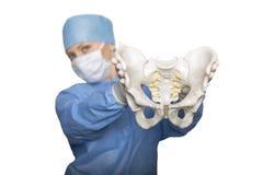 Pelvis in den Händen des Chirurgen stockbilder