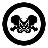 Pelvis skeleton black icon in circle vector illustration isolated . Pelvis skeleton black icon in circle vector illustration isolated flat style Stock Photography
