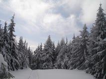 Pelz-Bäume auf Trostyan Stockbild