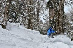 Pelz-Bäume unter einem Schnee stockfotos