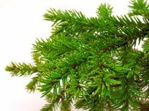 Pelz-Baum stockfoto