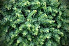 Pelz-Baum Hintergrund Lizenzfreie Stockbilder