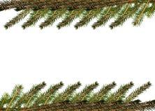 Pelz-Baum Zweig Stockbilder