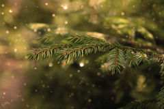 Pelz-Baumniederlassung für Weihnachtshintergrund Stockfotos