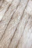Pelz des arktischen Fuchses Lizenzfreies Stockbild