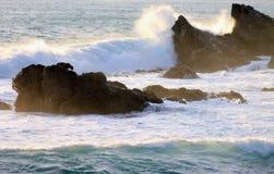 Pelz-Dichtung auf Felsen, Kap Palliser, Neuseeland Stockfotos