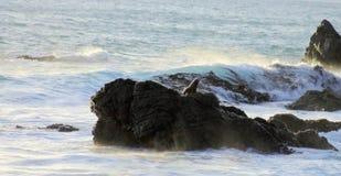 Pelz-Dichtung auf Felsen, Kap Palliser, Neuseeland Lizenzfreie Stockfotos