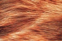 Pelz von Ginger Red Cat Texture Lizenzfreie Stockbilder