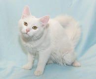Pelzartige weiße Katze mit dem gelben Augensitzen Lizenzfreie Stockfotos