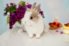 Pelzartiges weißes Kaninchen mit einer roten Stelle Blumenstrauß der Flieder im Hintergrund Lizenzfreies Stockbild