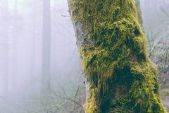 Pelzbäume lizenzfreie stockbilder