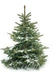 Pelzbaum getrennt auf Weiß Lizenzfreies Stockfoto