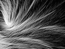 Pelzbeschaffenheit - erzeugtes Bild der Zusammenfassung digital Lizenzfreies Stockbild