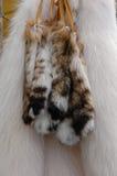 Pelzhecks und polare Fuchspelze lizenzfreie stockbilder