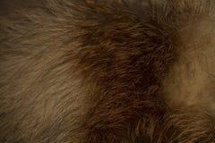Pelzprodukt vom roten Fuchs stockfotos