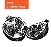 Pemagranate Arkivfoton