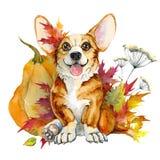 Pembroke bonito do Corgi do cachorrinho em um fundo branco ilustração do vetor