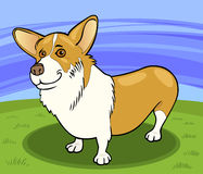 Pembroke welsh corgi dog cartoon illustration Royalty Free Stock Images