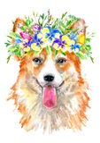 Pembroke Welsh Corgi portrait.Greeting card of a dog and floral wreath. House pet.Watercolor hand drawn illustration.White background vector illustration