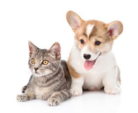 Pembroke Welsh Corgi puppy dog sitting with cat together. isolated Royalty Free Stock Photo